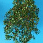 MiniNatur-300-23-Bäume-145-4-150x150 Filigranbüsche Frühherbst für den Maßstab 1:48 von MiniNatur