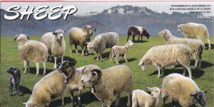 Schafe in 1:35 von MiniArt #38042